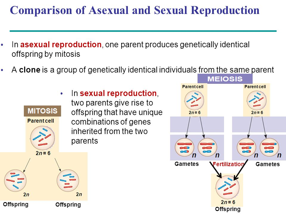Comparison of Asexual and Sexual Reproduction