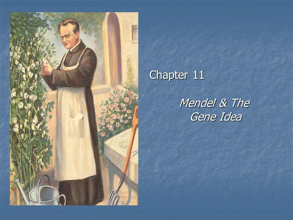 Chapter 11 Mendel & The Gene Idea