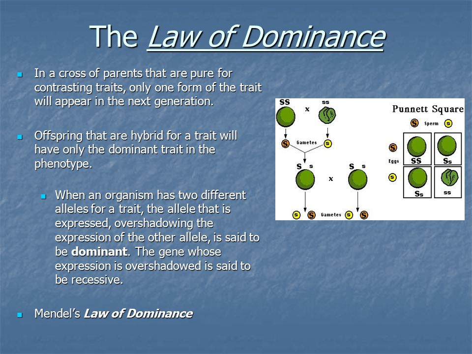 The Law of Dominance In a cross of parents that are pure for contrasting traits, only one form of the trait will appear in the next generation.