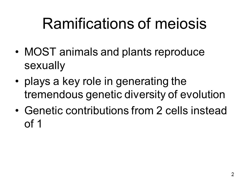 Ramifications of meiosis