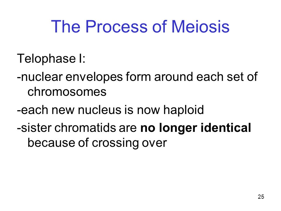 The Process of Meiosis Telophase I: