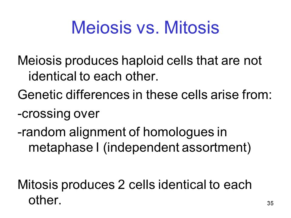 Meiosis vs. Mitosis Meiosis produces haploid cells that are not identical to each other. Genetic differences in these cells arise from: