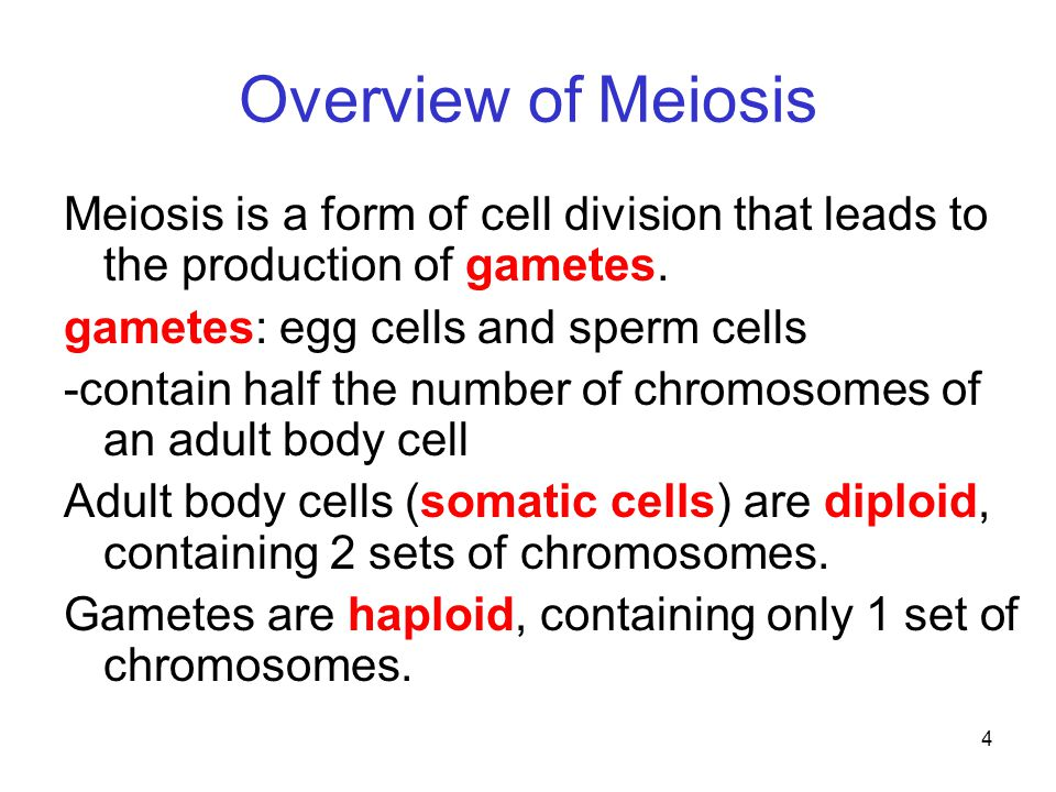 Overview of Meiosis Meiosis is a form of cell division that leads to the production of gametes. gametes: egg cells and sperm cells.