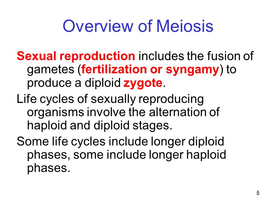 Overview of Meiosis Sexual reproduction includes the fusion of gametes (fertilization or syngamy) to produce a diploid zygote.