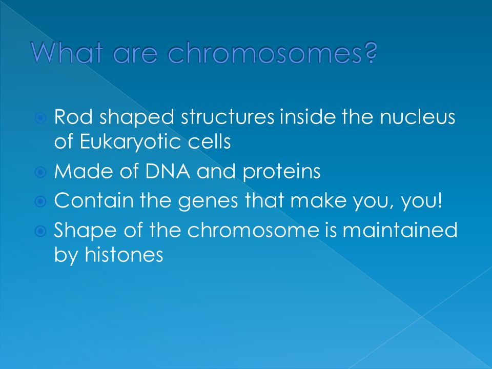 What are chromosomes Rod shaped structures inside the nucleus of Eukaryotic cells. Made of DNA and proteins.