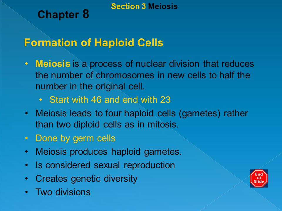 Formation of Haploid Cells