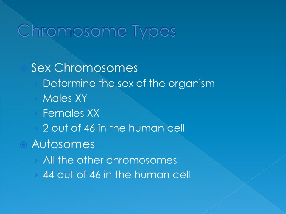 Chromosome Types Sex Chromosomes Autosomes