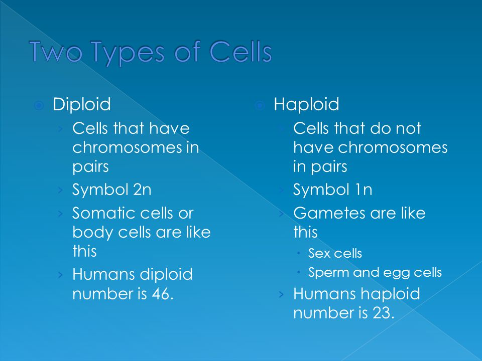 Two Types of Cells Diploid Haploid