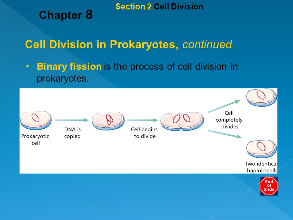 Cell Division in Prokaryotes, continued