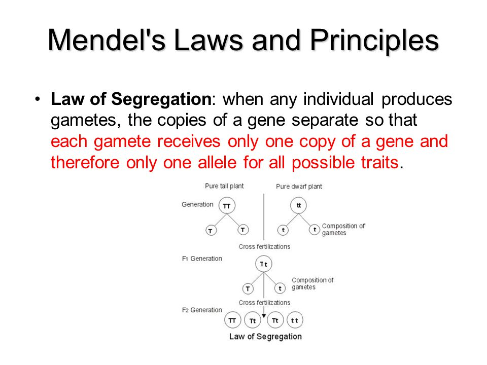 Mendel s Laws and Principles