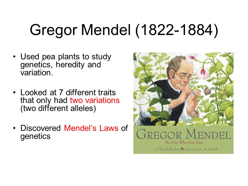 Gregor Mendel (1822-1884) Used pea plants to study genetics, heredity and variation.