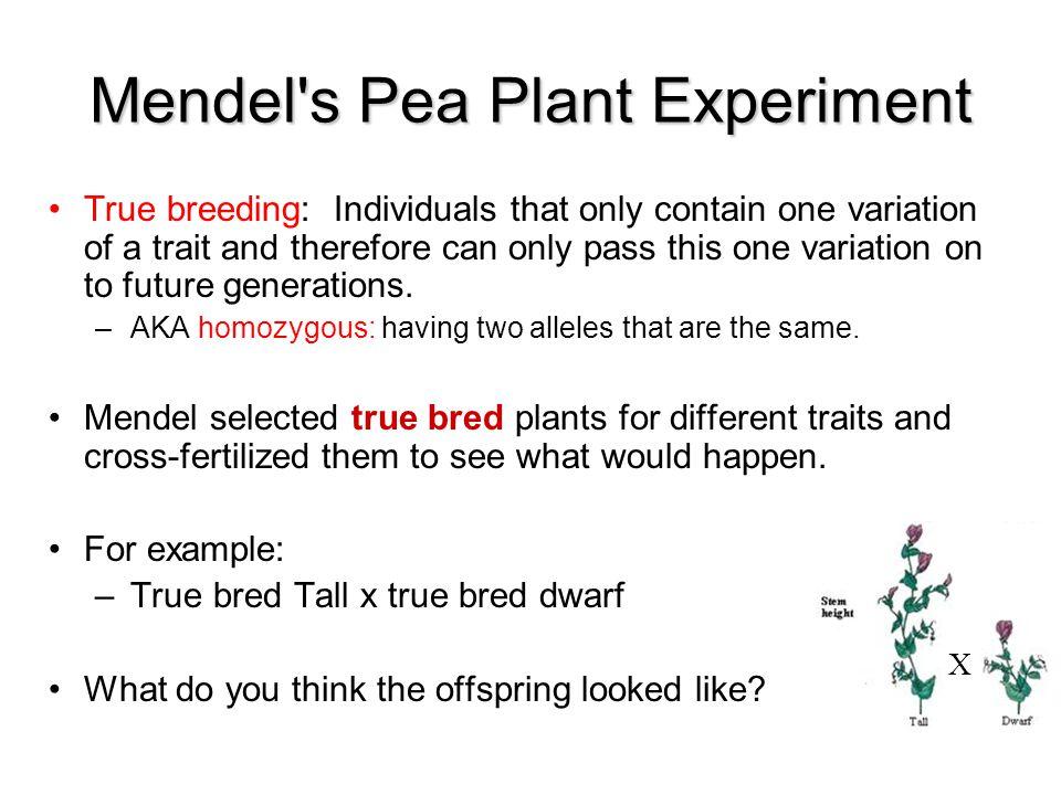 Mendel s Pea Plant Experiment