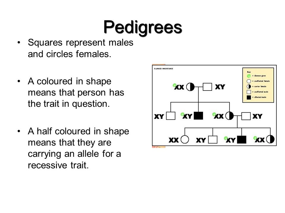 Pedigrees Squares represent males and circles females.