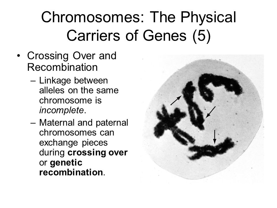 Chromosomes: The Physical Carriers of Genes (5)