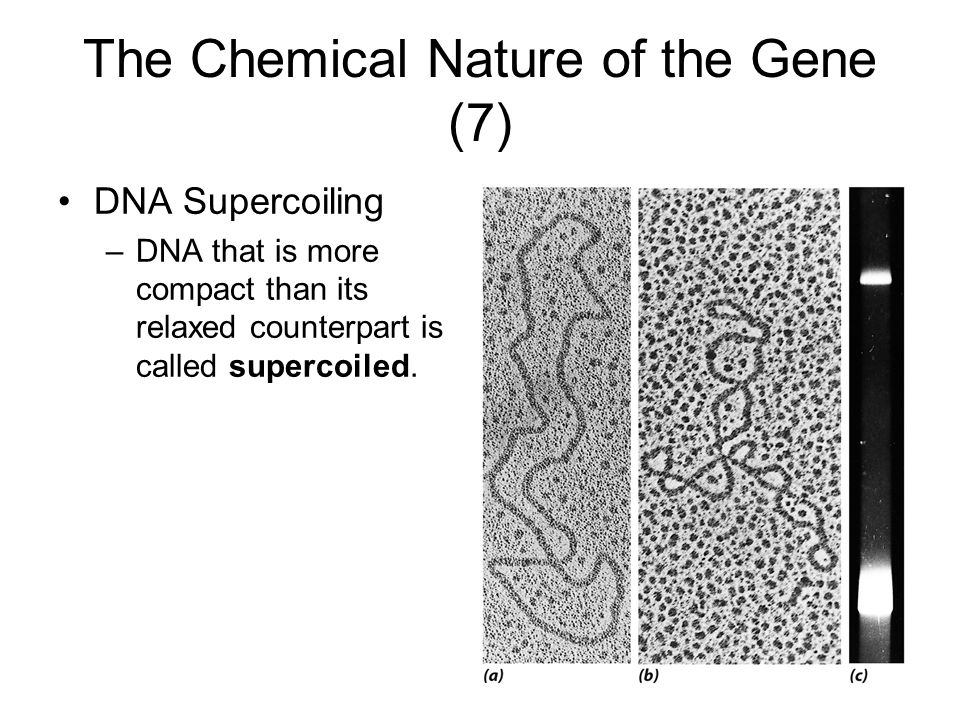 The Chemical Nature of the Gene (7)