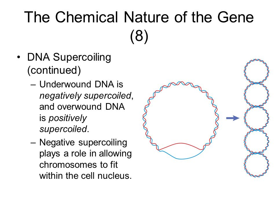 The Chemical Nature of the Gene (8)