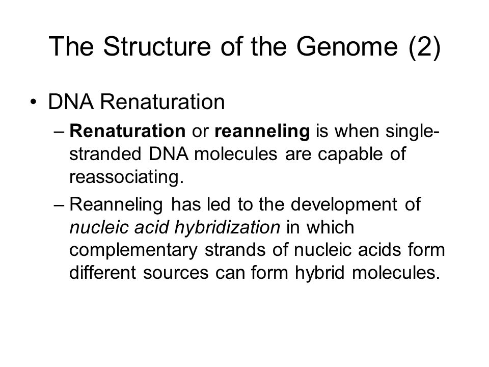 The Structure of the Genome (2)
