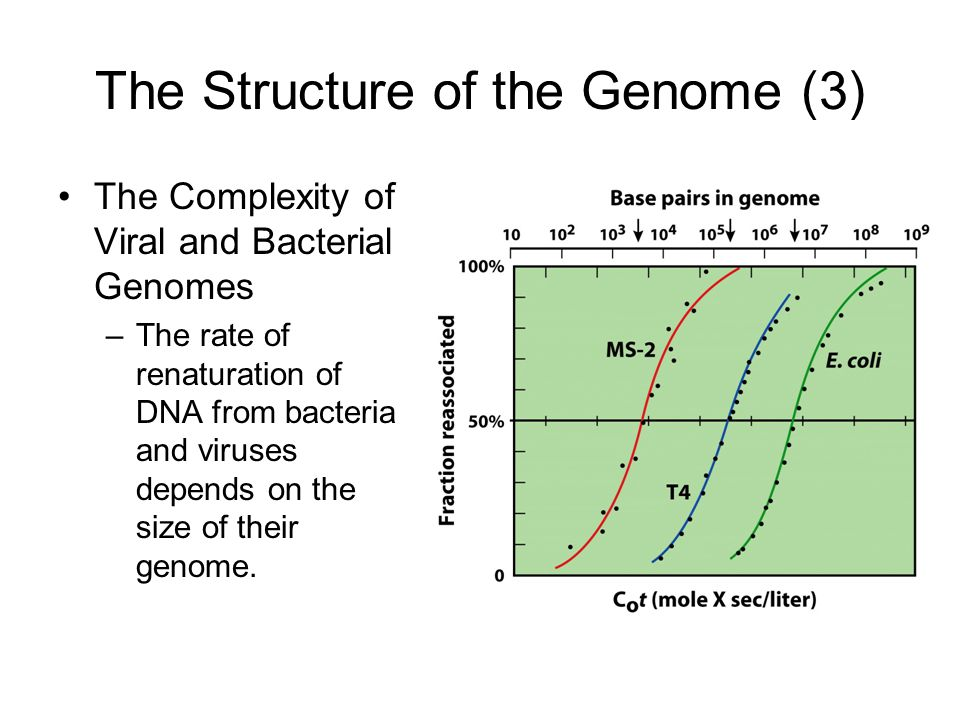 The Structure of the Genome (3)