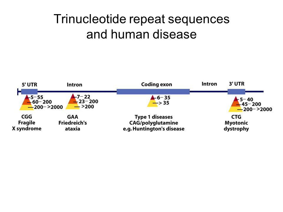 Trinucleotide repeat sequences and human disease
