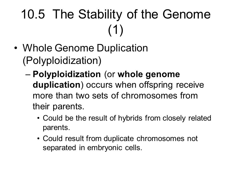 10.5 The Stability of the Genome (1)