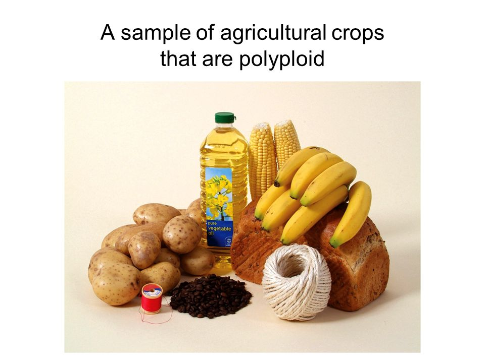 A sample of agricultural crops that are polyploid