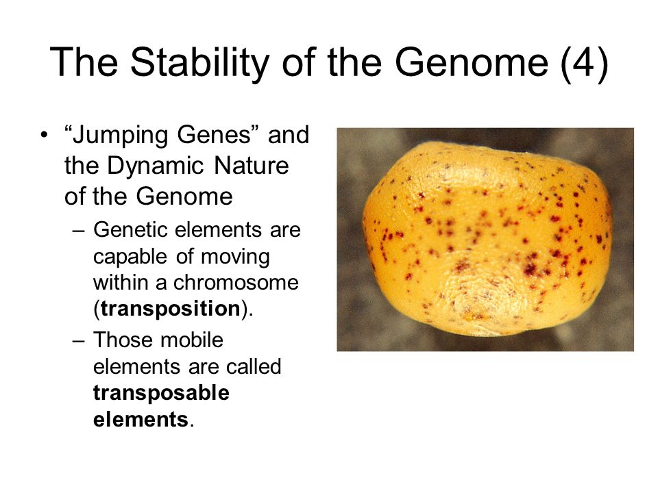 The Stability of the Genome (4)