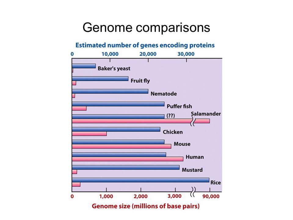 Genome comparisons