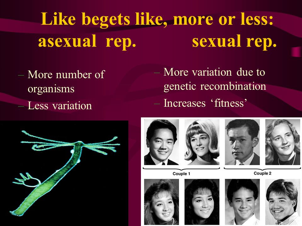 Like begets like, more or less: asexual rep. sexual rep.