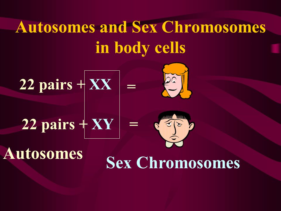 Autosomes and Sex Chromosomes in body cells