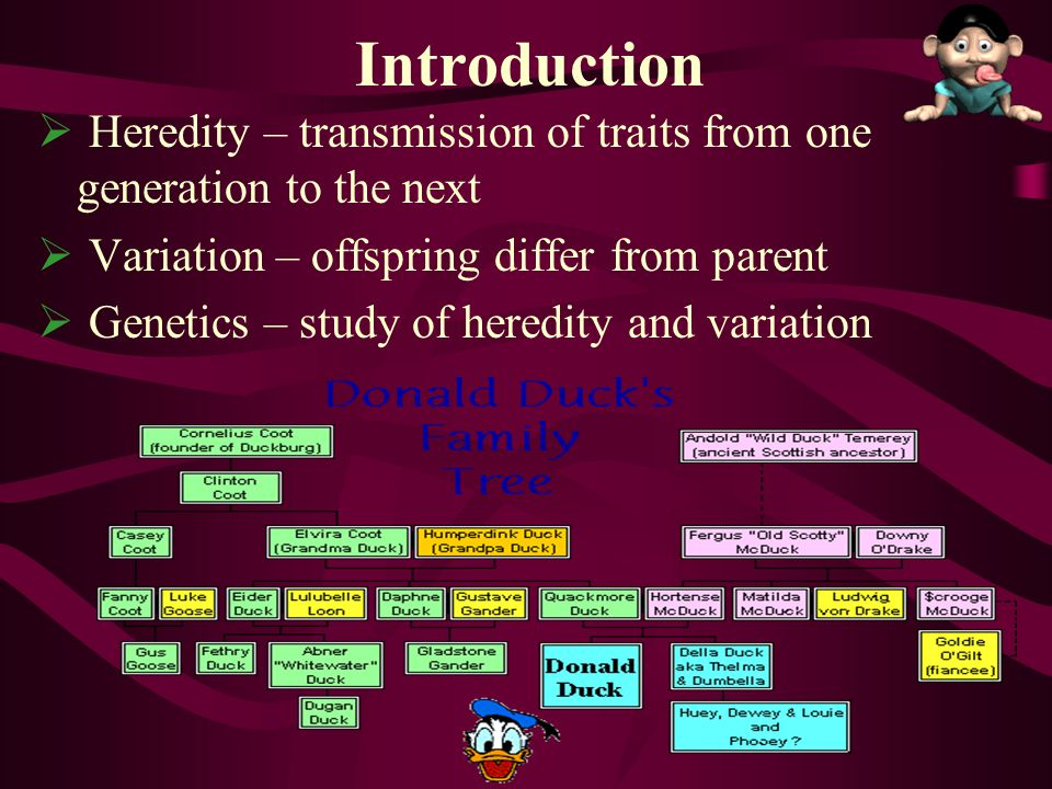 Introduction Heredity – transmission of traits from one generation to the next. Variation – offspring differ from parent.