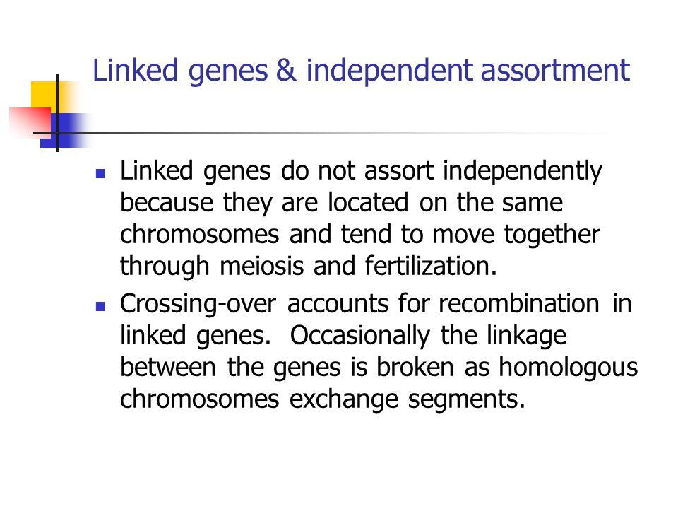 Linked genes & independent assortment