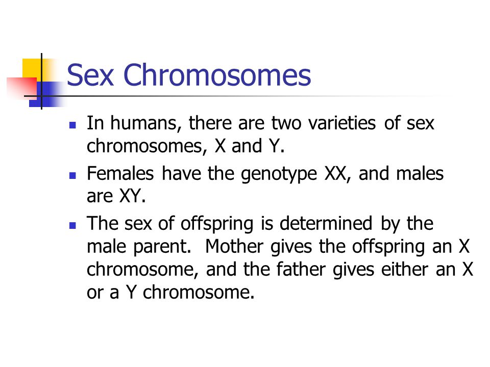 Sex Chromosomes In humans, there are two varieties of sex chromosomes, X and Y. Females have the genotype XX, and males are XY.