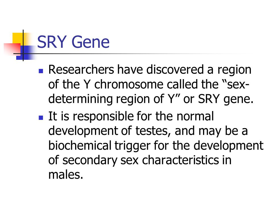 SRY Gene Researchers have discovered a region of the Y chromosome called the sex-determining region of Y or SRY gene.