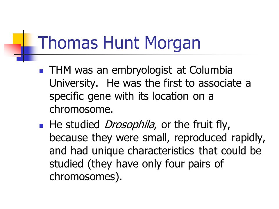 Thomas Hunt Morgan THM was an embryologist at Columbia University. He was the first to associate a specific gene with its location on a chromosome.