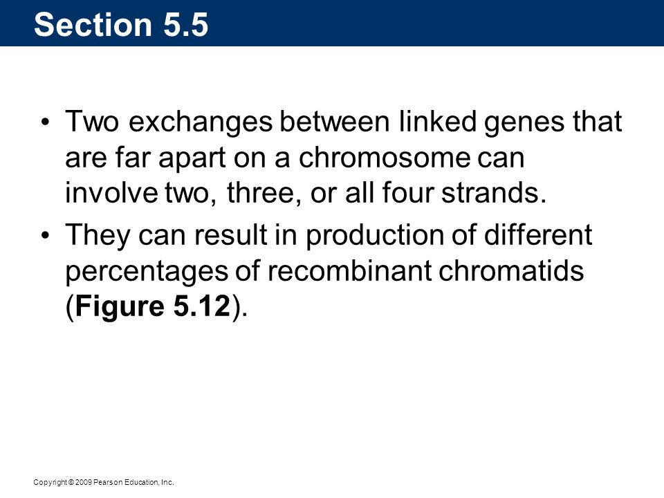 Section 5.5 Two exchanges between linked genes that are far apart on a chromosome can involve two, three, or all four strands.