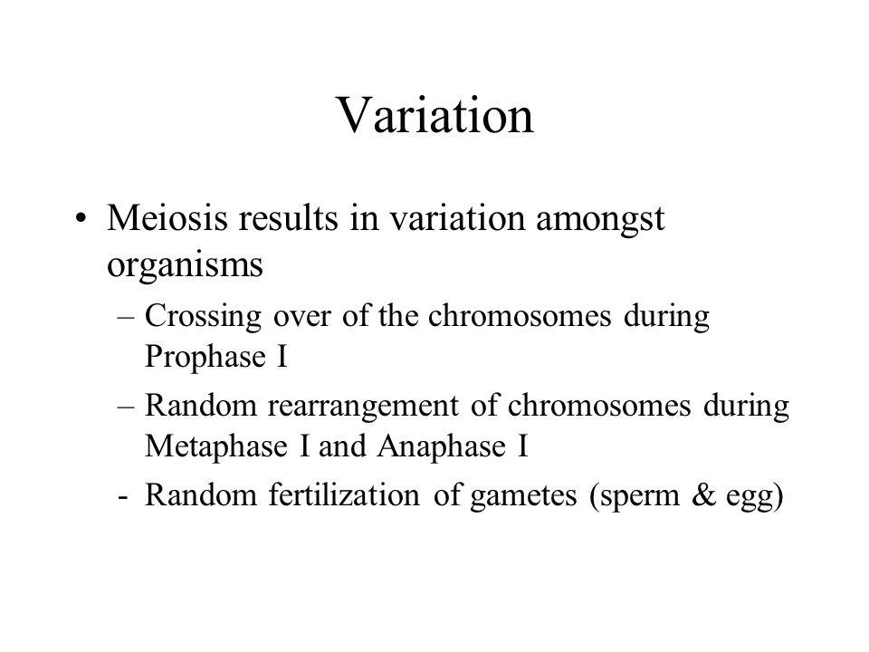 Variation Meiosis results in variation amongst organisms