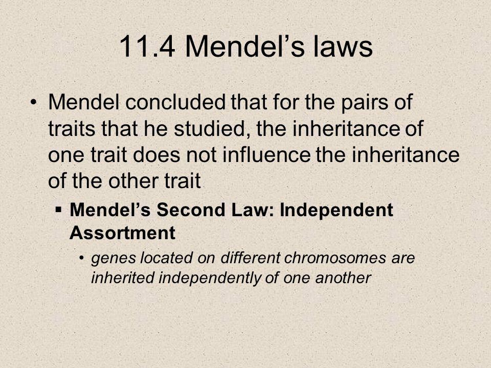 11.4 Mendel's laws