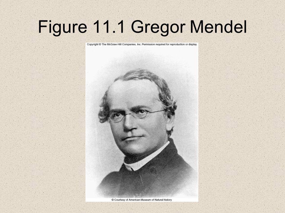 Figure 11.1 Gregor Mendel