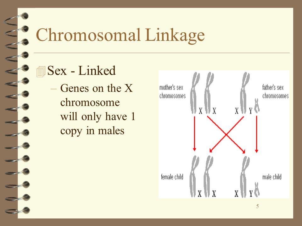 Chromosomal Linkage Sex - Linked