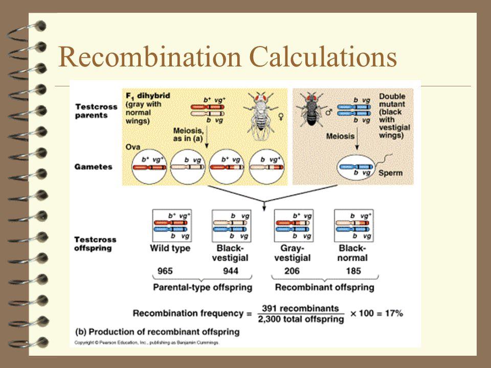 Recombination Calculations