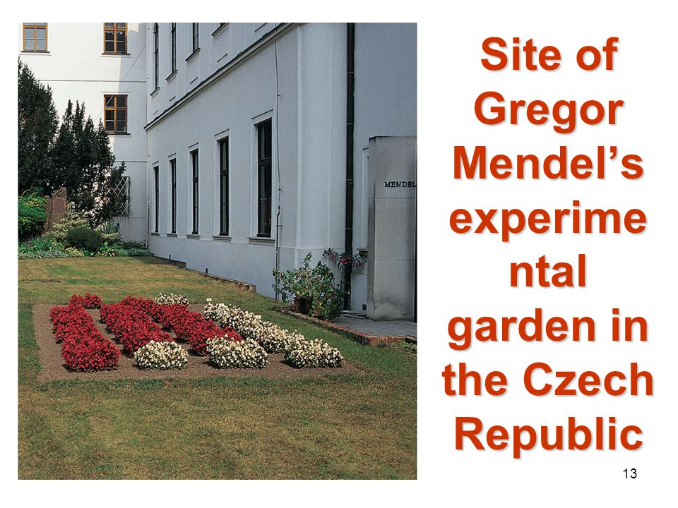 Site of Gregor Mendel's experimental garden in the Czech Republic