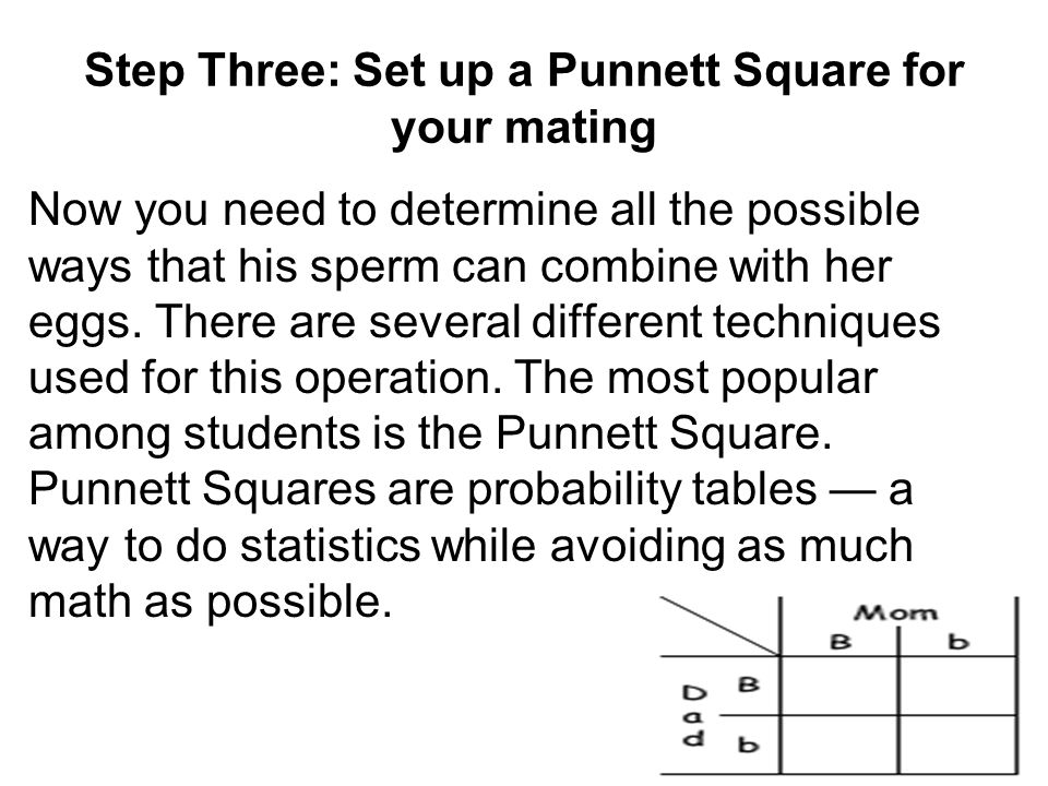 Step Three: Set up a Punnett Square for your mating
