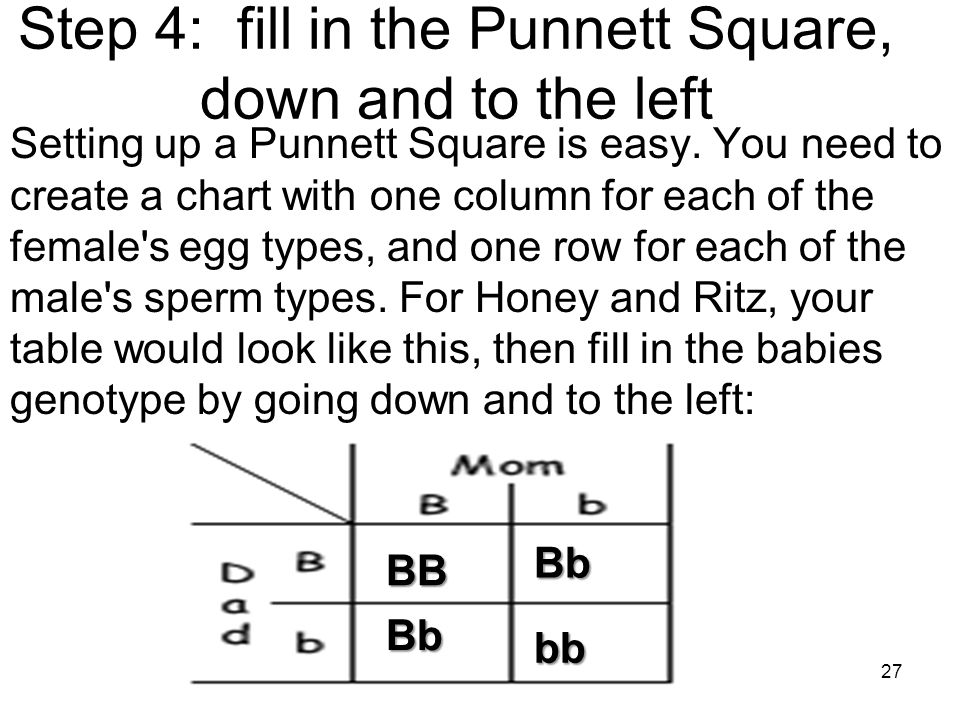 Step 4: fill in the Punnett Square, down and to the left