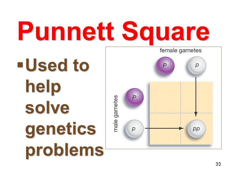 Punnett Square Used to help solve genetics problems Mendelian Genetics
