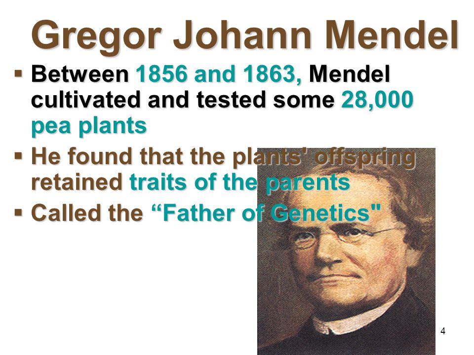 Mendelian Genetics 4/15/2017. Gregor Johann Mendel. Between 1856 and 1863, Mendel cultivated and tested some 28,000 pea plants.
