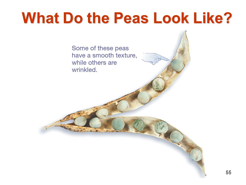 What Do the Peas Look Like