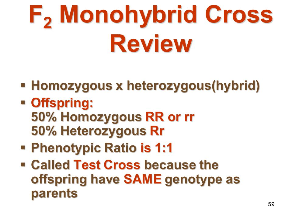 F2 Monohybrid Cross Review