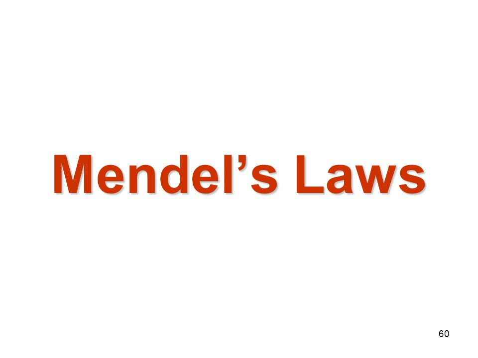 Mendelian Genetics 4/15/2017 Mendel's Laws