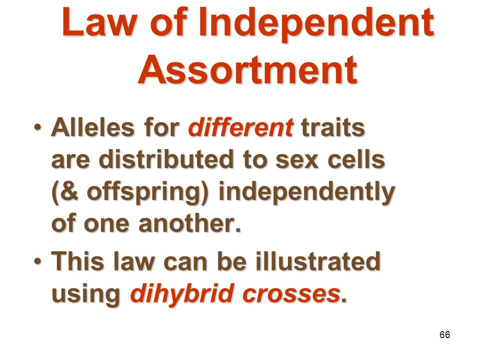 Law of Independent Assortment