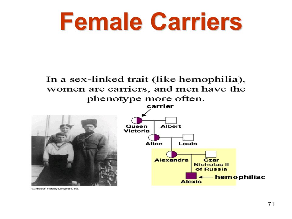Mendelian Genetics 4/15/2017 Female Carriers